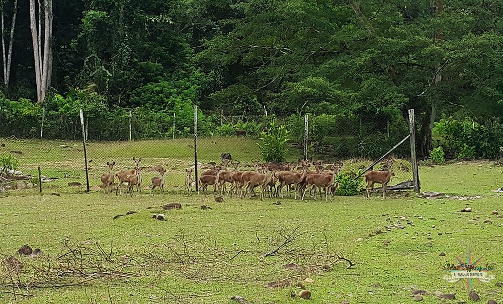 Camping at Mondikot Deer Camp, Kaiduan Village, Papar, Kinarut, Penampang, Sabah, Chloe Tiffany Lee (4)