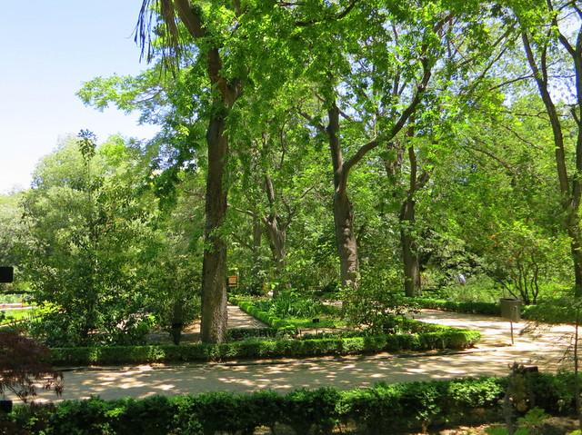 Real Jardin Botanico-001