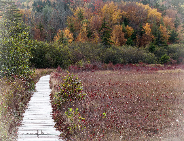 Autumn at Cranberry Glades