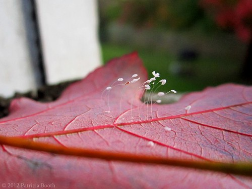 Day 284 Dainty Spores by pixygiggles