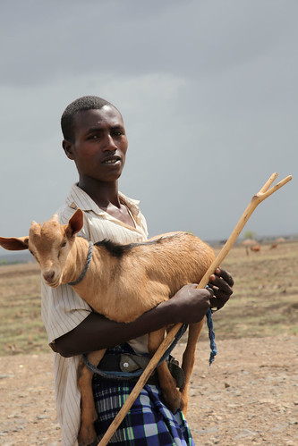 Taking young Goat (Kid) to market at Mi'eso