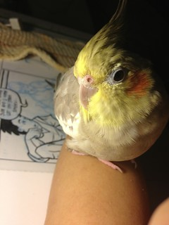 Sin assisting me while I ink