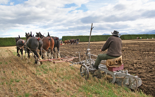Horse Ploughing show.
