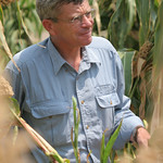 ILRI's Michael Blümmel in an experimental sorghum field in India