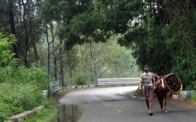 kodaikanal roadside-2
