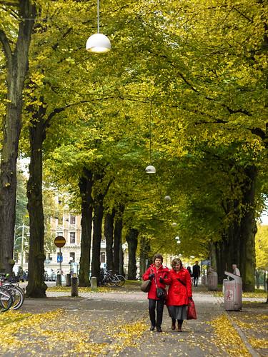 277/366 - Autumn walk by Flubie