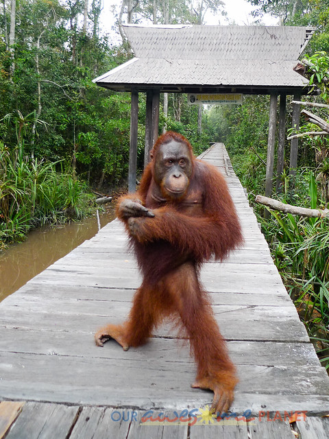Orangutan World, Tanjung Puting Borneo Adventure-162.jpg