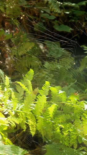 Spider web on hike... by ruthiequilts