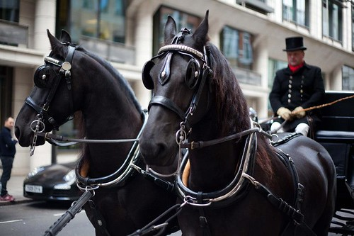 Dodger's horses
