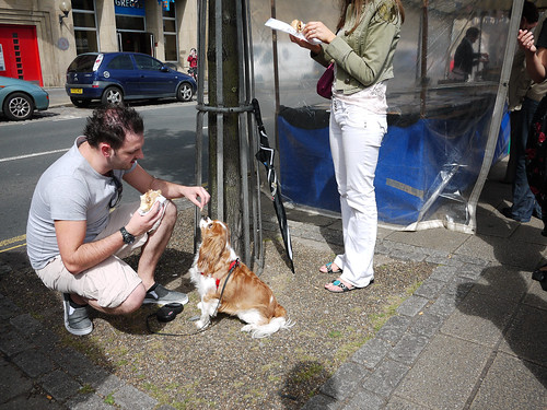 Man Feeding Dog-1030787