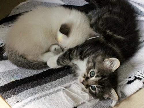 Kitten Naptime
