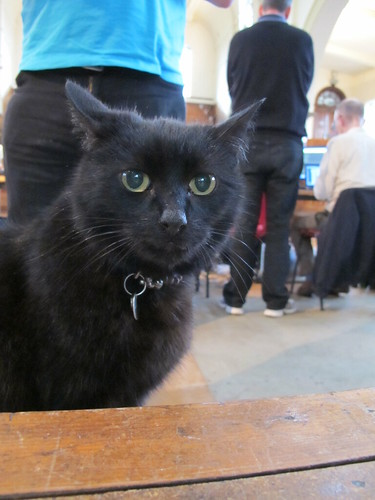 Kipper the OSHcamp cat