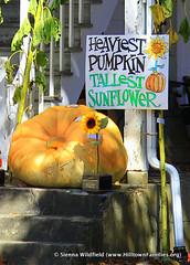 Ashfield Fall Festival