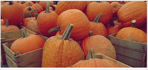 Pumpkins by dogfrog