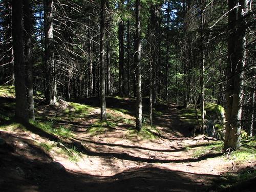 Pe traseu în pădure