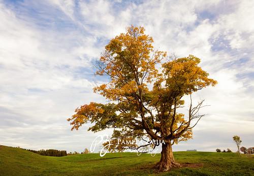 20121001-328C5065-WM by {Pamela Zmija Photography}