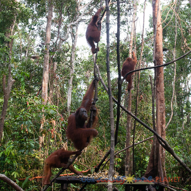 Orangutan World, Tanjung Puting Borneo Adventure-88.jpg