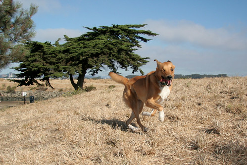 Running Sage