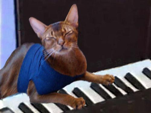 jake-as-keyboard-cat