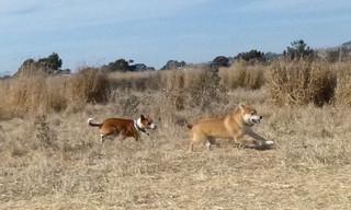13 September 2012 Bowpi chases Kenzie