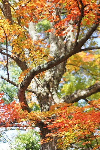 fall at kenyon by Lily M-C