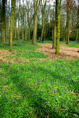 20120421-04_Bluebells in Cawston Woods - Rugby by gary.hadden