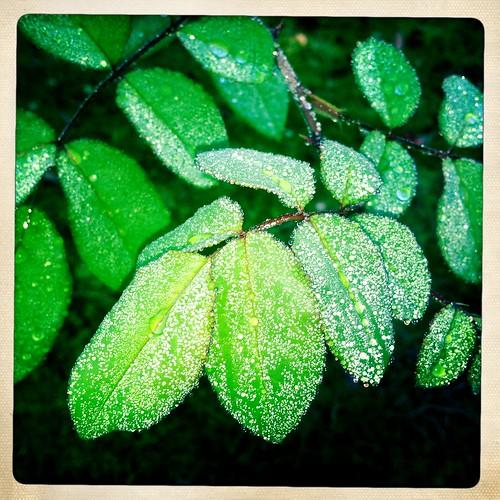 fall rain in the morning