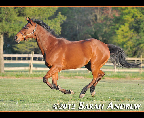 The fabulous flying Wizard in the springtime (I'm going through pre-Frankenstorm sunshine deprivation).