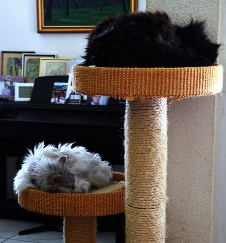 Nera at the top, Fluffy below