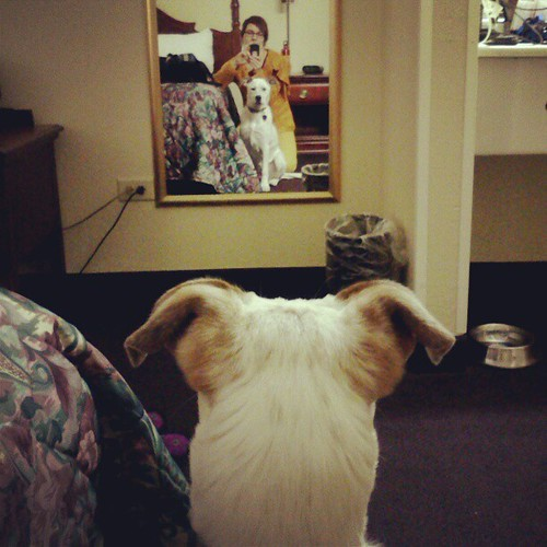 Birdie's first mirror (and hotel room).