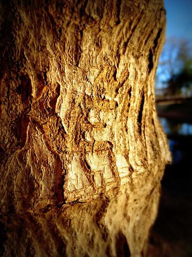 """""""E"""" on a tree"""