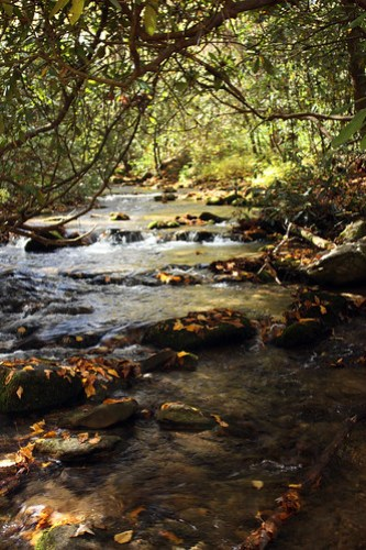 20121017_Great_Smoky_Mountains_005