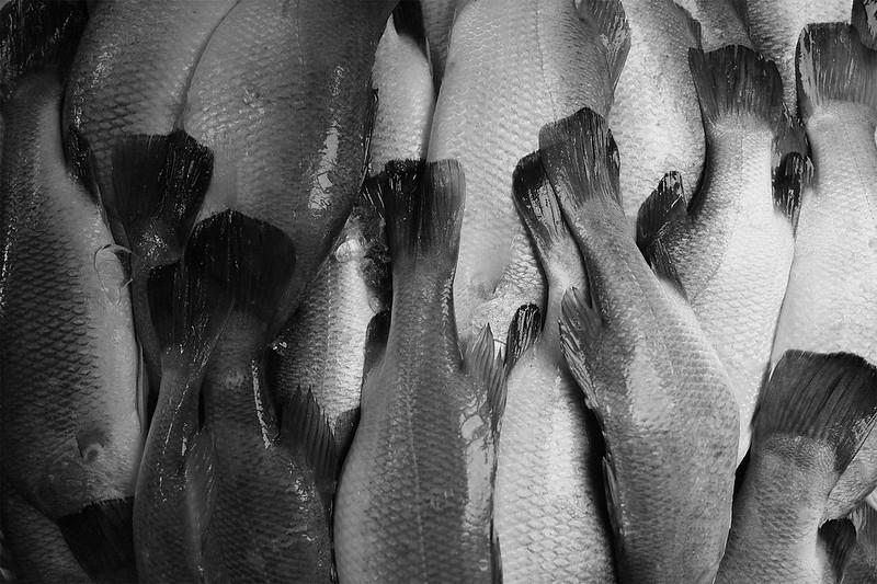 fish_s