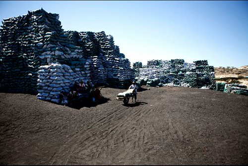 Charcoal exports at the port of Kismayo in southern Somalia. The area was recently occupied by the US-backed Kenyan Defense Forces in an effort to destroy the economic base for the Al-Shabab resistance movement. by Pan-African News Wire File Photos