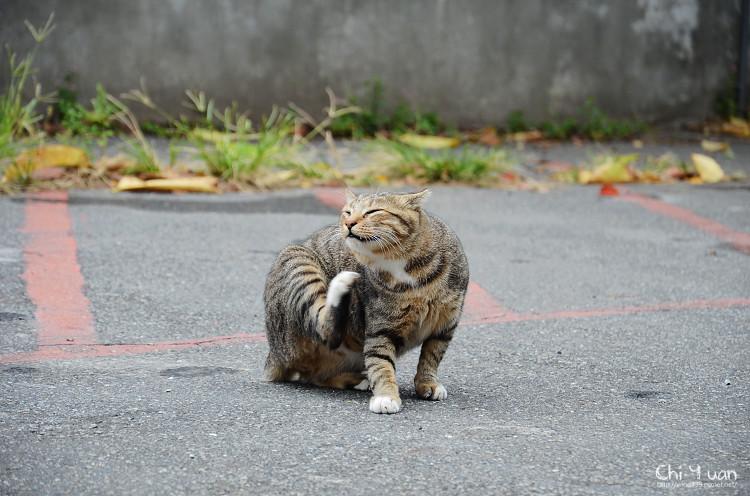 台北淡水貓散步09.jpg