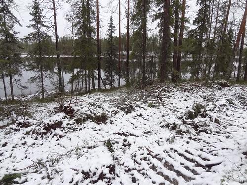 Malahvia, Suomussalmi: rantametsän avohakkuu