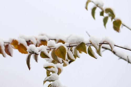 früher Wintereinbruch