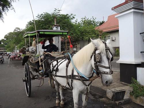 Delman Kuda Putih by adi pratama 001