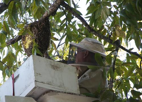 Mark up high at hive 4