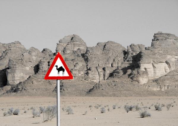 Cruce de camellos