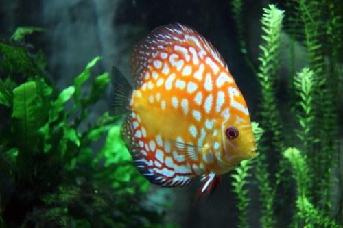 20121015_Georgia_Aquarium_002