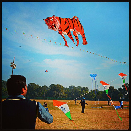 Tiger flying
