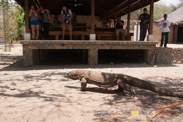 Komodo Dragon National Park-43.jpg