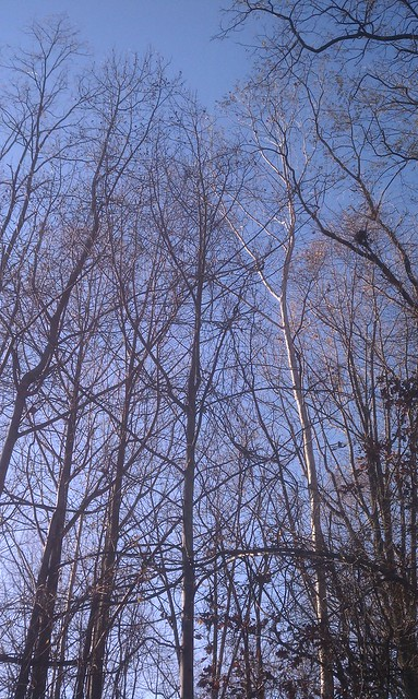 Pretty Trees 1