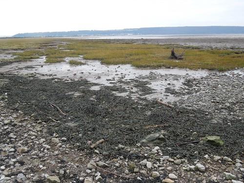 Sand Bay to Weston-super-Mare