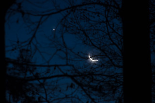 Moon and Planet through Trees