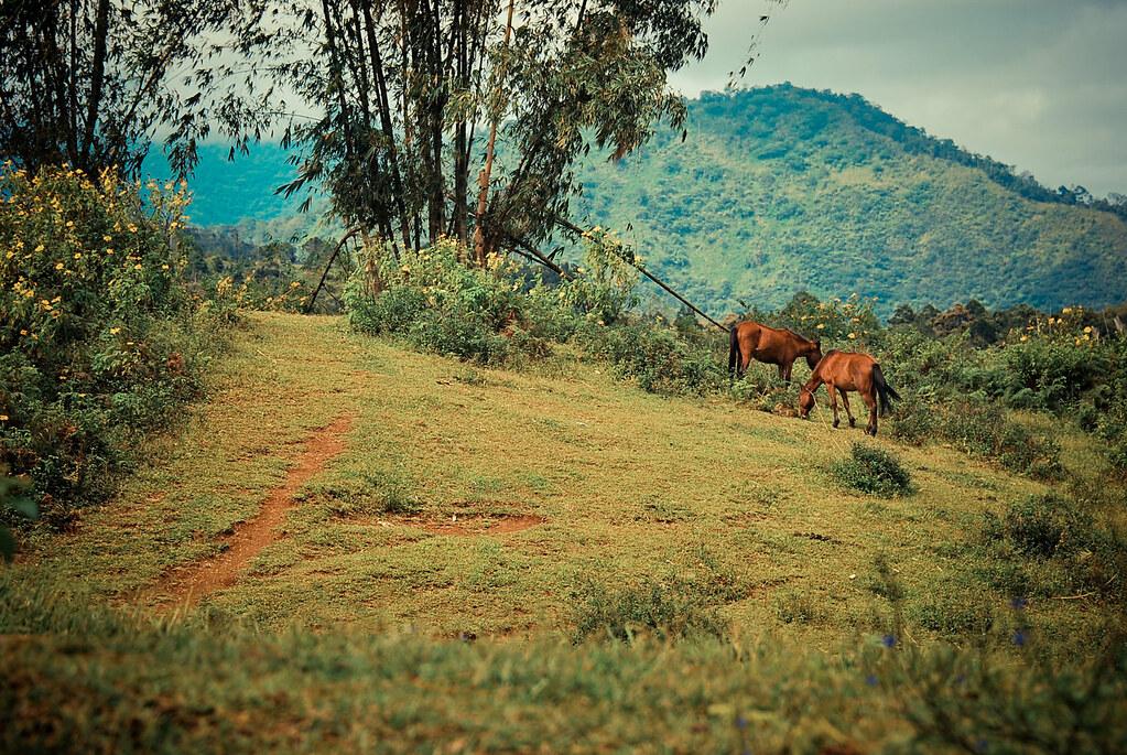 Bukidnon, Dahilayan, Horse