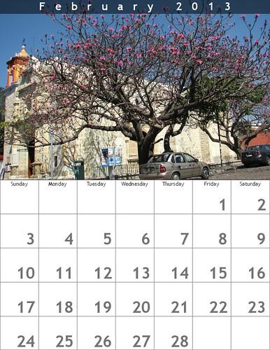 February 2013 Coquito Trees in Barrio Jalatlaco, Oaxaca  @bighugelabs #oaxacatoday