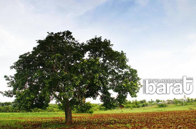 open land in Bantayan island madridejos cebu