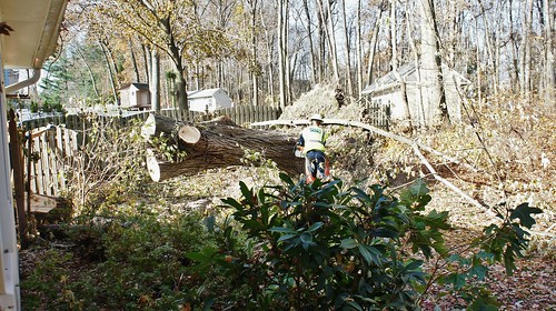 Removing the Tree That Fell on Our House